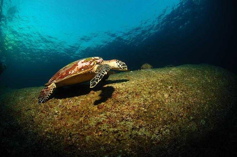 schildkröte tauchen thailand